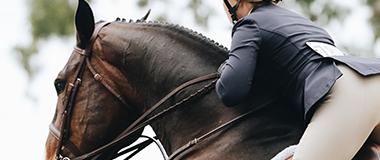 Hästjuridik
